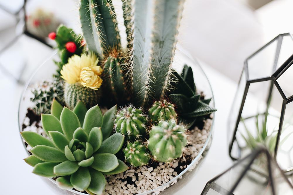 Mini Jardin Ou Acheter Un Terrarium Et Comment Le Faire Soi Meme