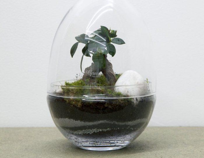 Mini jardin o acheter un terrarium et comment le faire for Acheter des plantes par internet