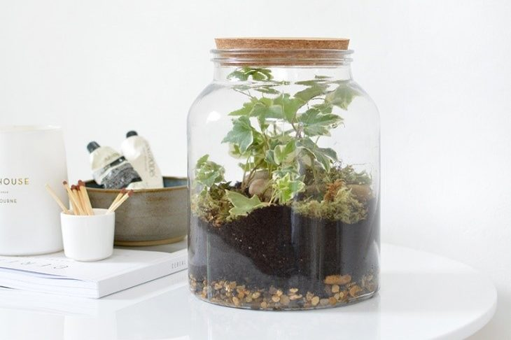 terrarium-ferme-humide-ecosysteme